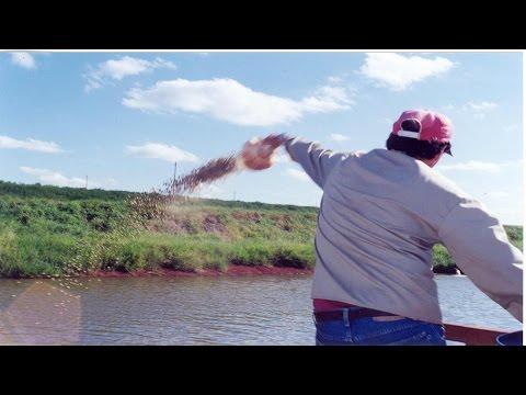 Clique e veja o vídeo Curso Nutrição e Alimentação de Peixes