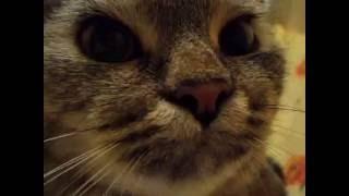 Кошка Ромашка громко урчит!