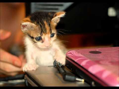 A Rescued Cat Named Nishi