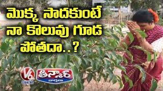 Chandravva Fear About KTR Warning On Haritha Haram | Teenmaar News