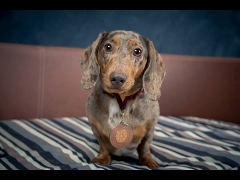 Salvador - Miniature Dachshund - 2 Weeks Residential Dog Training