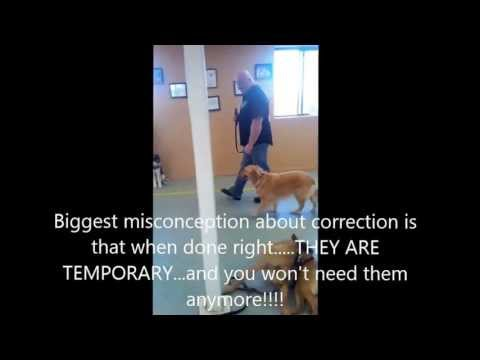 AMAZING!  Teaching a dog that pulls A LOT to heel nicely on a loose leash IN JUST MINUTES!!!