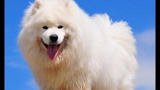 Самые дорогие собаки /  The most expensive dog