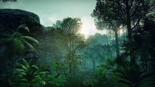 In the deep Rainforest ~ Relax Music with Nature Sounds