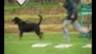 Rottweiler Colombia, Bheliot Sieger Colombiano 2008 Parte-a