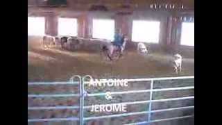 A cowboy journey breeding farm jura