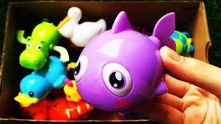 Learn Colors with Animals and Animals Names ZOO Surprise Toys for Kids Education Video in Box