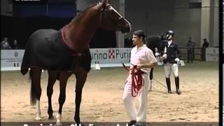 Fieracavalli 2013: cavalli italiani a Verona