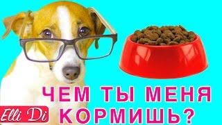 СОСТАВ: КАК ВЫБРАТЬ КОРМ ДЛЯ СОБАКИ ИЛИ КОШКИ | Elli Di Pets