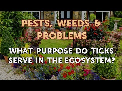 What Purpose Do Ticks Serve in the Ecosystem?