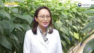 수경재배성장일기-식물은 어떻게 물만 먹고 사나 - 1.…