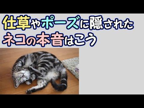 【かわいい猫】仕草やポーズに隠されたネコの本音はこう