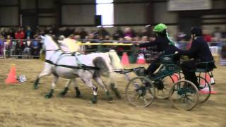 Scurry Driving. Chris Orchard. Carriage Fair. 2011