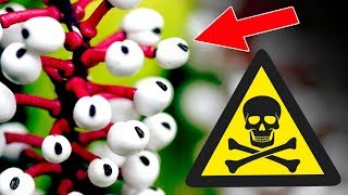 Top 10 Most Dangerous Plants in the World