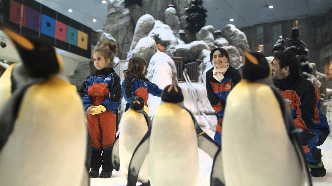 mall of the emirates meet penguins at zoo