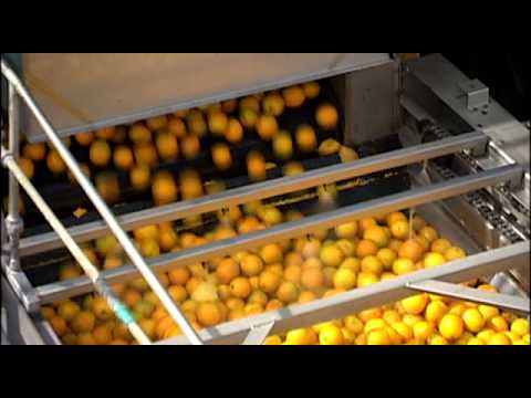 Florida Orange Juice: From the Grove to Your Glass