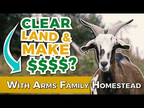Is Clearing Land With Goats Profitable? | Arms Family Homestead