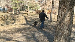 В Волгограде определяют площадки для выгула собак