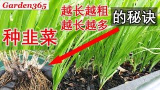【种韭菜】韭菜越长越粗光加肥还不够 |这几个因素一定要注意