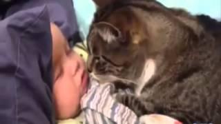 кошки-няньки