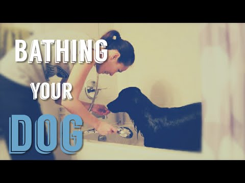 bathing-a-dog---tips-to-make-giving-your-dog-a-bath-easier