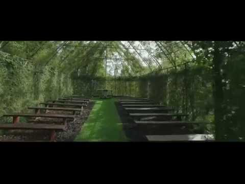 Tree Church -  A living, breathing church in New Zealand