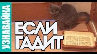 Что делать если кошка начала метить? Узнавайка