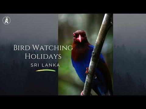 Sri Lanka, The Unparalleled Bird Watching Holiday Destination