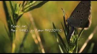 festival nature namur slection 2013  papillons m d f mazzocco bande annonce