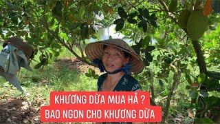 Nhận nhiệm vụ gom mít ngon tại vườn cho Khương Dừa lên Sài Gòn bán...!