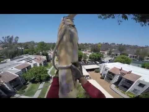 Removal Eucalyptus tree