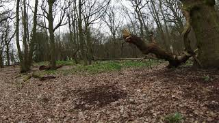 DJI FPV Drone Acro - Into the woods (Packs 5 & 6)