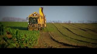 Kopanie Buraków 2016 #ropa euro tiger#claas arion 620 & wielton 18 ton