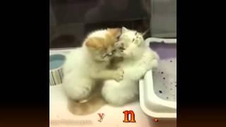 Это видео не может не поднять настроение ))