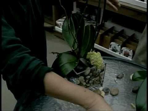 Orchids In Glass Vases Youtube