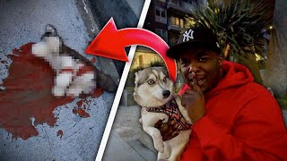 i-tricked-my-friend-into-thinking-his-dog-got-ran-over-he-cried-revenge-prank