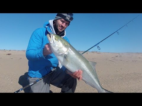 Surfcasting Cape Cod For