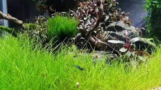 Home аквариум.