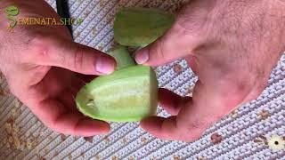 à quoi ça ressemble concombre melon