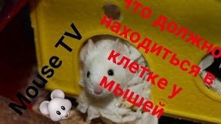 Обустраивание клетки декоративной мышки|MOUSE TV