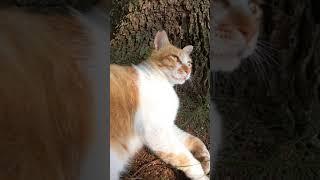 木陰で休む野良猫を撫でる