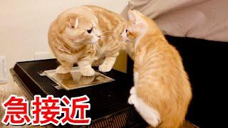 急接近!忍び寄る子猫に、先住猫が見せた行動がこちら!