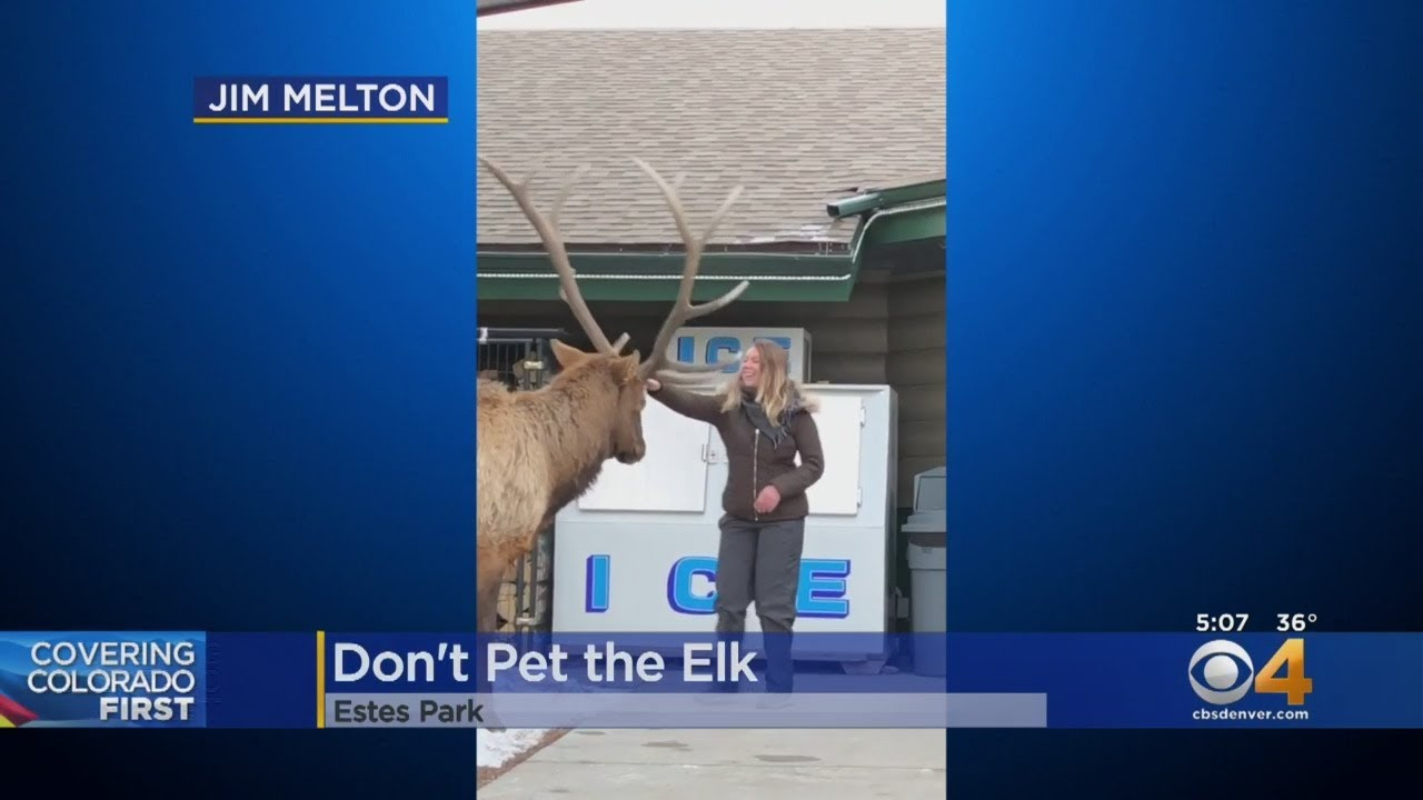 'Don't Pet The Elk' Warns Wildlife Officials After Video Surfaces
