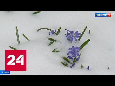 Снежно, скользко и ветрено: в столицу вернулась зима - Россия 24