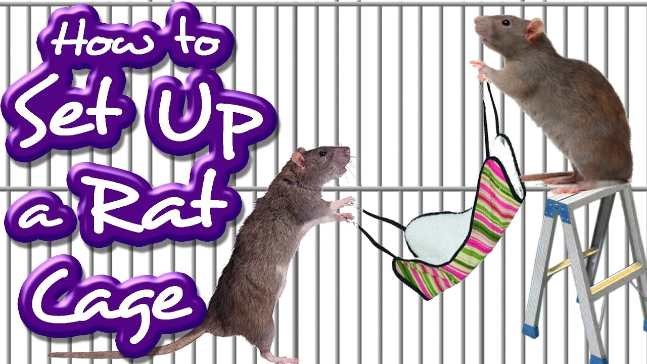 How To Set Up A Rat Cage Like A Pro Youtube