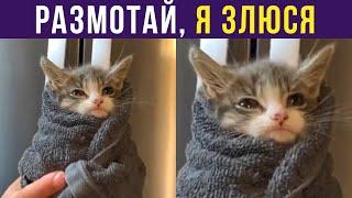 Приколы с котами. Размотай, я злюся! | Мемозг #310