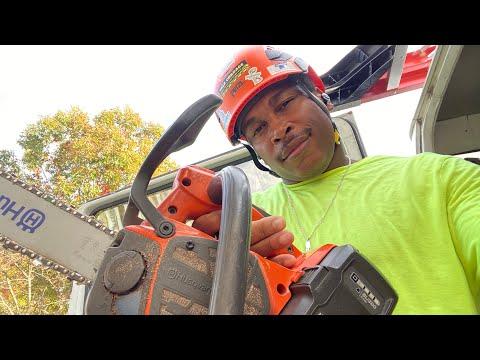 Arborist Tree Climbing 101