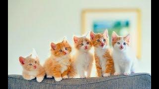Онлайн веб-камера показывает «Кошкин Дом»Всем удачного просмотра