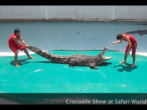 Crocodile show at Safari World, Koh Kong province, Cambodia
