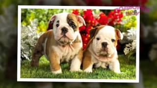 Прикольные щенки! Лучшие фото ЩЕНКОВ! Видео для детей